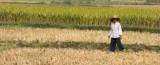 Rural Farmer.