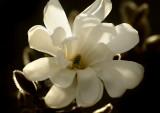 Magnolia season 1