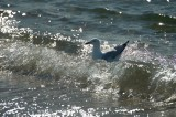 Surf, sand and seagulls 1