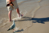Surf, sand and seagulls