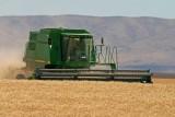 Harvesting Douglas County Gold