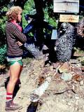 Monte At Cispus Pass Sept 1977