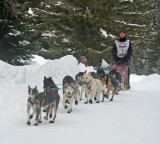 Cascade Quest  Sled  Dog  Races