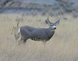 Montana Mule Deer Hunting And Road Trip  2007