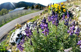 Spring Has Hit The Entiat Valley !!