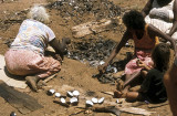 Cooking whelks, Tiwi Islands