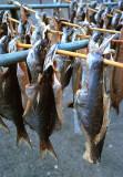 Fish rack