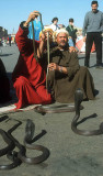 Snake charmer in the Djemaa El Fna