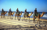Camel rides, Noosa North Shore