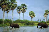 Elephants crossing the Rufiji