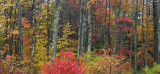 Fall Forest - Manchester, New Hampshire