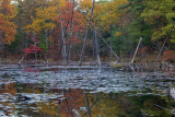 Fall-Color Swamp - Manchester, New Hampshire