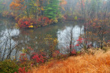 NH - Foggy Swamp - Manchester, New Hampshire