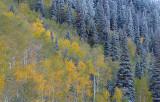 UT - Aspen Fall Color 4