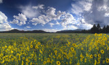 AZ - Bonito Park Flowers 1