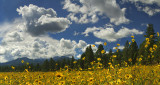AZ - Bonito Park Flowers 3