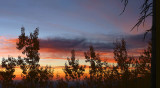 Flagstaff Aspen Sunrise