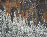 Oak Creek Canyon Snowy Pines