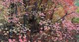 Oak Creek West Fork Fall Color 2