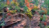 Oak Creek West Fork Fall Color 3