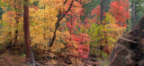 AZ - Oak Creek West Fork Fall Color 4