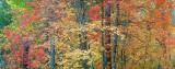 AZ - Oak Creek West Fork Fall Color 5