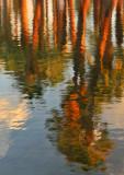 AZ - Papago Park Pond Reflection