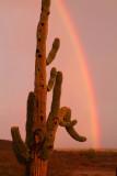 AZ - Saguaro Rainbow