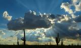 AZ - Saguaro Sun Rays