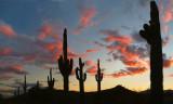 AZ - Saguaro Sunset 2