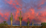 AZ - Saguaro Sunset 3