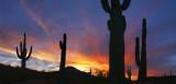 Saguaro Sunset 6