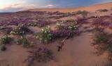 CA - Wildflower Field 5