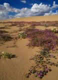 Wildflower Field 6