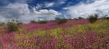 AZ - Wildflower Field 7