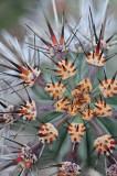 AZ - Cactus Needles