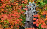 Oregon - Fall's Carnival of Color