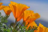 Springtime Rebirth