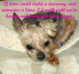 My Angel Stephanie