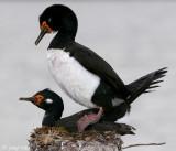 Falkland Islands: Darwin, November 15-16, 2008