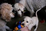 November 12th - Dog Pile