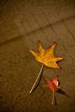 December 8th - Wet Leaves