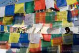 Nepal4807.jpg