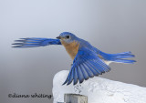 Gallery : Birds