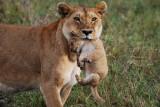 Serengeti, May 31, 2009