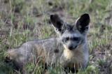 Serengeti, June 1, 2009