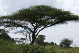 More Serengeti scenery