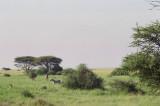 On the way out of Amboseli National Park, KY - zebra & giraffe