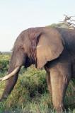 Elephant - again