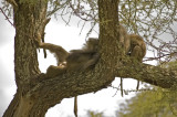 A baboon just relaxing
